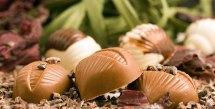 helena chocolates